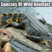 35 Wild Species Of Wild Animals Recipes - When SHTF we will have to think outside the box, do things we wouldn't normally have to do... i.e. look for our own food. Kill animals we love, to survive.
