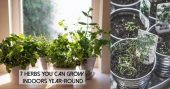 7 Herbs You Can Grow Indoors Year-Round — I am so glad I came across this article, I didn't realize that herbs can be frown indoors all year round, after reading this in depth article I now understand we don't have to wait until spring to enjoy our favorite herbs.