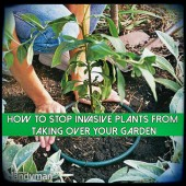 How To Stop Invasive Plants From Taking Over Your Garden