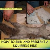 How To Skin And Preserve A Squirrels Hide