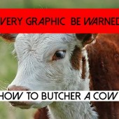 How to Butcher a Cow – (Very Graphic Be Warned)
