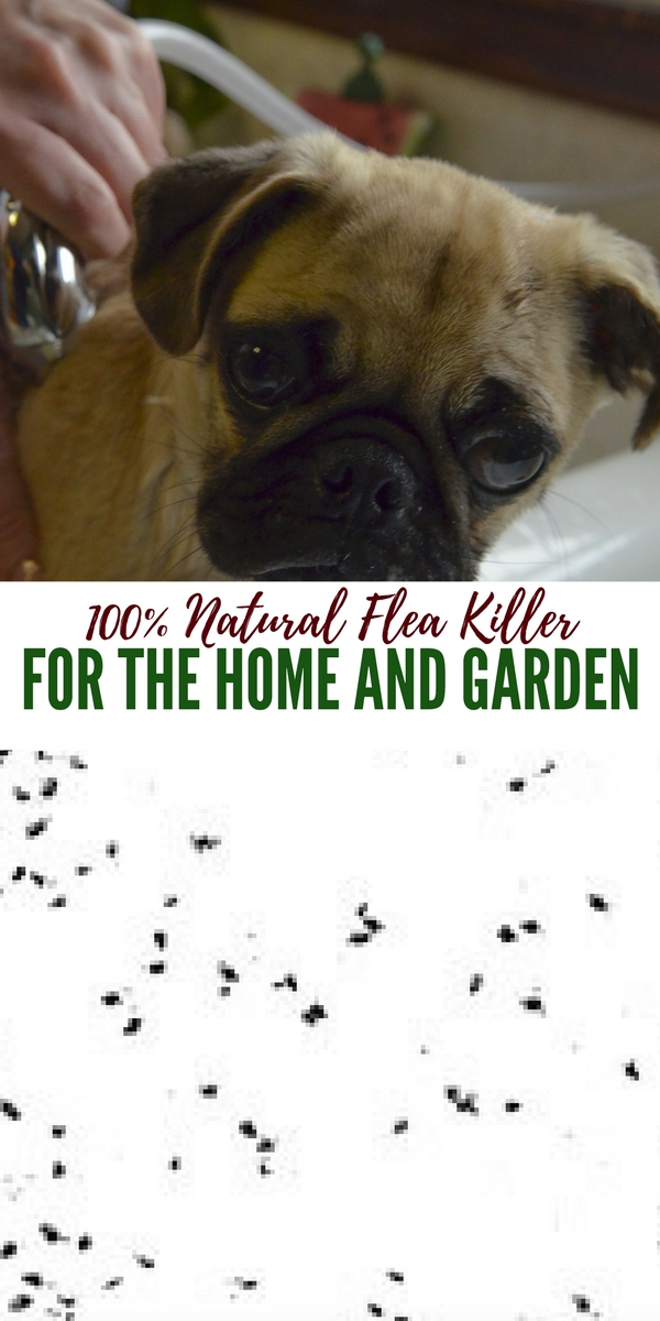 100% Natural Flea Killer For The Home And Garden I have 3 dogs and I have been really lucky not one of my dogs has had fleas! My wife and I discuss fleas every spring and I did some research and found a great natural way to kill the fleas in the home or the garden.
