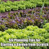 55 cool creative ideas in raised bed gardening shtf prepping central for How to start a garden from scratch