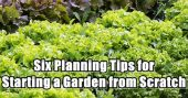 Six Planning Tips for Starting a Garden from Scratch— Spring will be here in a couple of months and if you are new to gardening this article may give you the upper hand, you may have tried before and had failed crops or the veggies didn't grow well enough.