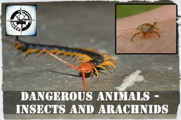 Dangerous Animals - Insects And Arachnids