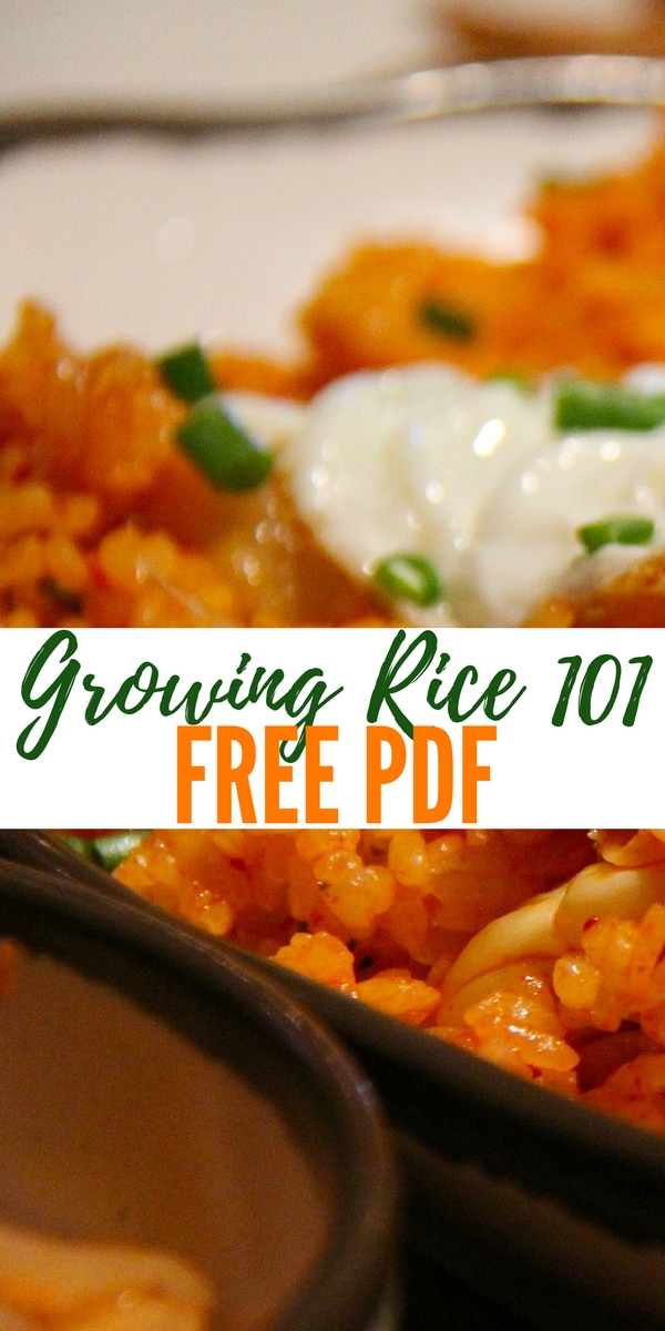 Growing Rice 101 - Free PDF — Knowing how to grow rice could mean the difference of surviving or dying ... Rice is full of carbohydrates and Rice cultivation is well-suited to countries and regions with low labor costs and high rainfall, as it is labor-intensive to cultivate and requires ample water.