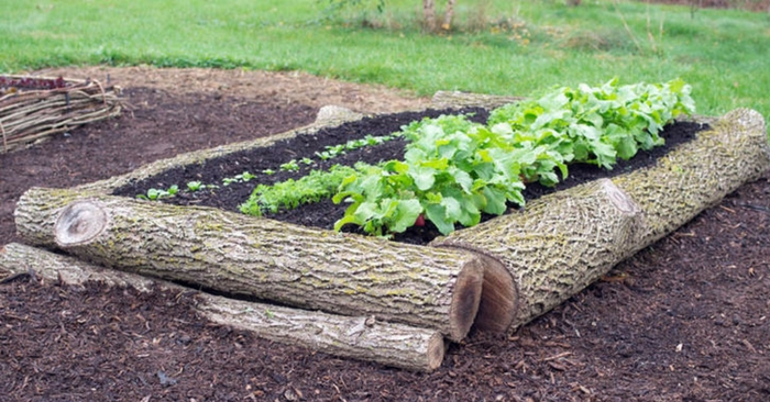 How To Use Raised Garden Beds Space Efficiency