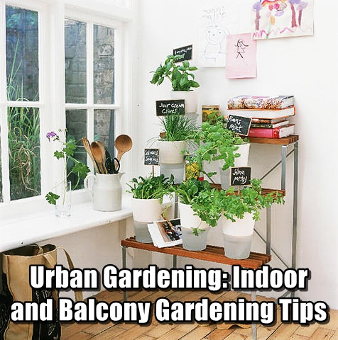 Urban Gardening Indoor and Balcony Gardening Tips