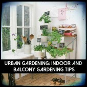 Urban Gardening: Indoor and Balcony Gardening Tips