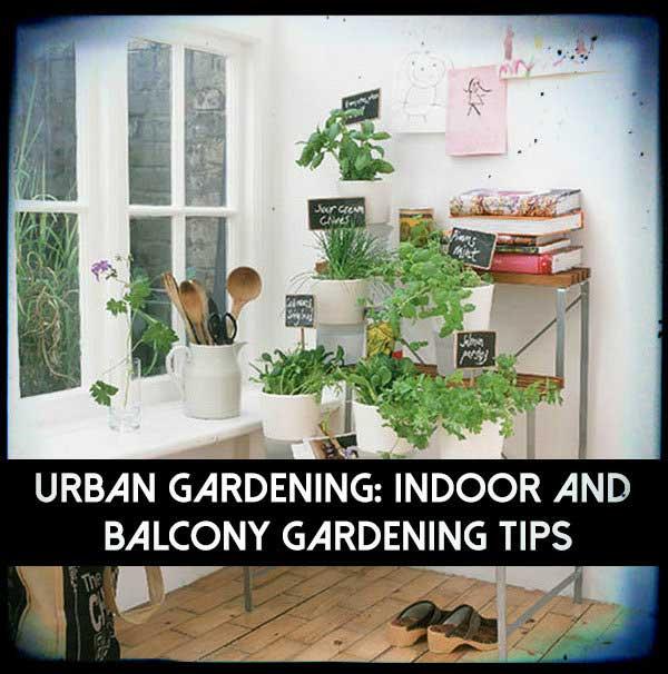 Tips For Indoor Gardening: Urban Gardening: Indoor And Balcony Gardening Tips