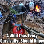 4 Wild Teas Every Survivalist Should Know - These 4 wild teas are just fantastic, they can give you much needed nutrients and boost morale if you find your self lost in the woods. Or if you want to show off when camping.