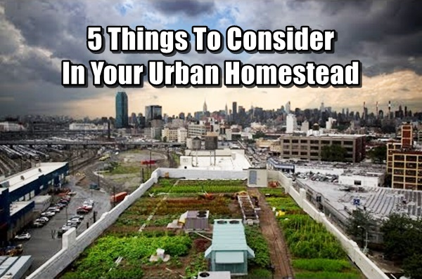 5 Things To Consider In Your Urban Homestead 2