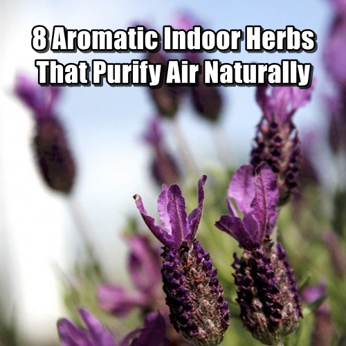 8 Aromatic Indoor Herbs That Purify Air Naturally