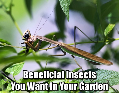 Beneficial Insects You Want In Your Garden