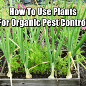 How To Use Plants For Organic Pest Control