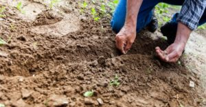 What To Start Planting In March - veggies