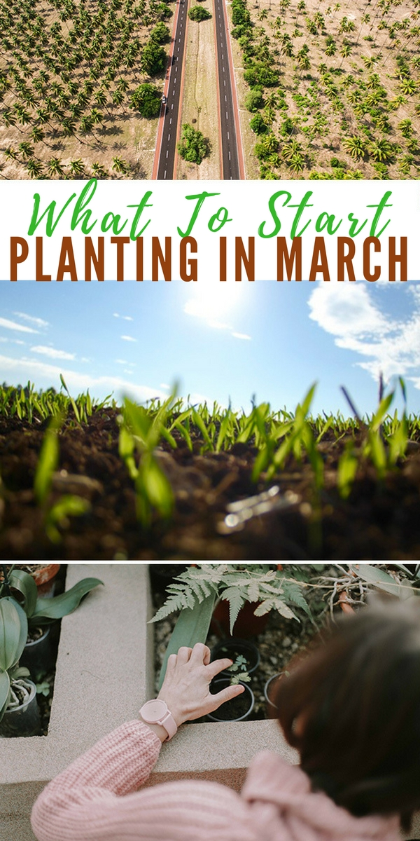 What To Start Planting In March - food