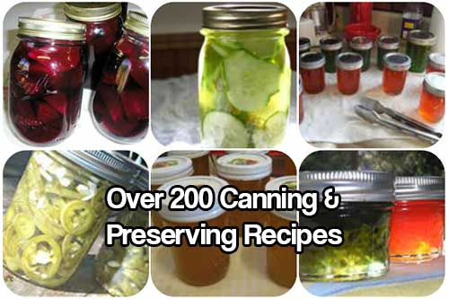 200+ Canning and Preserving Recipes - These 200+ Canning and Preserving Recipes will rock your socks off and will keep you busy for a long time. The recipes are all on one website and easily navigable, so if you can't find a recipe come back and I will can my own socks. :)