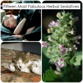 Fifteen Most Fabulous Herbal Sedatives