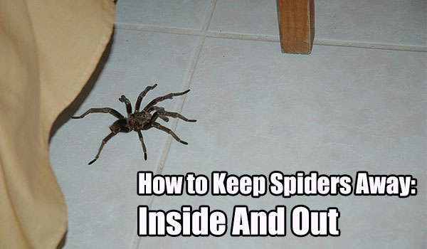 How to keep spiders away inside and out shtf prepping for Home remedies to keep spiders away