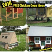 2416 FREE Chicken Coop Ideas