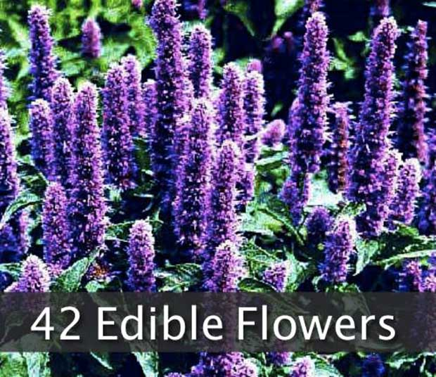 42 Flowers You Can Eat