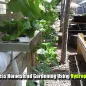 Soilless Homestead Gardening Using Hydroponics - Hydroponics is a fast growing way of gardening, Hydroponics is a subset of hydroculture and is a method of growing plants using mineral nutrient solutions, in water, without soil.