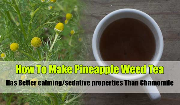 How To Make Pineapple Weed Tea - Has better calming/sedative properties than Chamomile