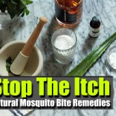 Stop The Itch: Natural Mosquito Bite Remedies - Are you looking for natural ways to ease the bites of those nasty mosquito's?