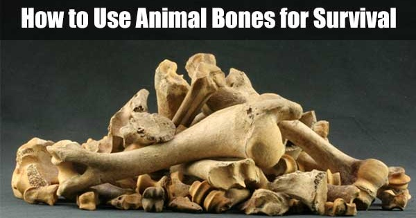 How to Use Animal Bones for Survival - Learning how to use everything you see around is important, especially if you are stranded in the wilderness or in a hostile environment. Sometimes the things that you consider as scraps and you normally toss in the trash can be useful.