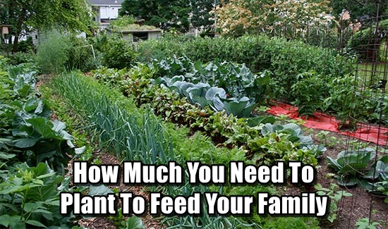 How Much You Need To Plant To Feed Your Family