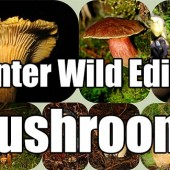 Winter Wild Edible Mushrooms