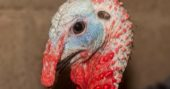 10-turkey-hunting-tips-and-tactics-fbcover