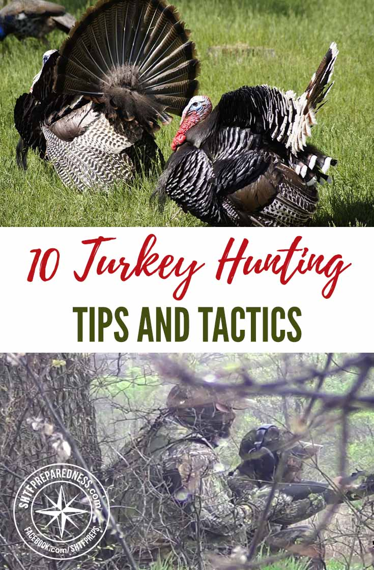 10 Turkey Hunting Tips And Tactics — Wild Turkey numbers today are at an all-time high; hunters across America have a great opportunity to enjoy this highly assessable, wonderful renewable resource.