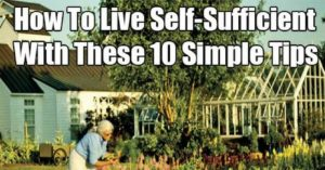 How To Live Self-Sufficient With These 10 Simple Tips — Have you ever wondered about what it would be like if you lived out on a farm where your neighbor was a mile away and you owned at least an acre, rather than in the middle of a bustling city with a department store just a few minutes away?