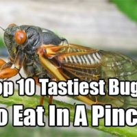 Top 10 Tastiest Bugs To Eat In A Pinch