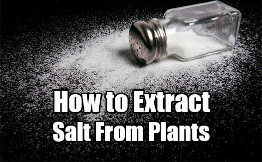 How to Extract Salt From Plants