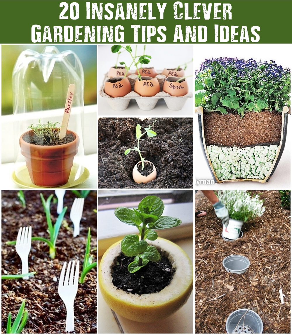South Central Gardening Landscaping Ideas You Can Use: 20 Insanely Clever Gardening Tips And Ideas