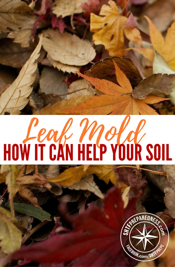 Leaf Mold and How it Can Help Your Soil — Although leaf mold should not replace your regular fertilizers and compost, as these help to provide the nutritional supplements that soil needs to prosper and survive, it is a fantastic addition to the Earth.