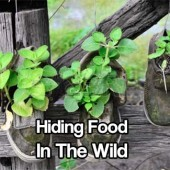 Hiding Food In The Wild