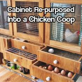 Cabinet Re-purposed Into a Chicken Coop