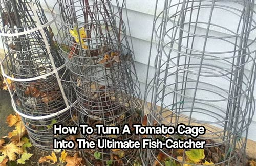 How To Turn A Tomato Cage Into The Ultimate Fish-Catcher