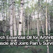 Birch Essential Oil for Arthritis, Muscle and Joint Pain & Survival