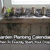 Garden Planting Calendar: See When To Exactly Start Your Crops