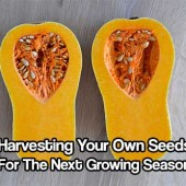 Harvesting Your Own Seeds For The Next Growing Season