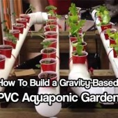 How To Build a Gravity-Based PVC Aquaponic Garden