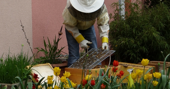 How To Keep Bees: A Beginner's Guide — Beekeeping can be a fun and rewarding past time. It also has a few benefits, honey, wax and the knowledge that you are helping the bee population survive. It is great in so many of the foods and beverages we consume on a daily basis.