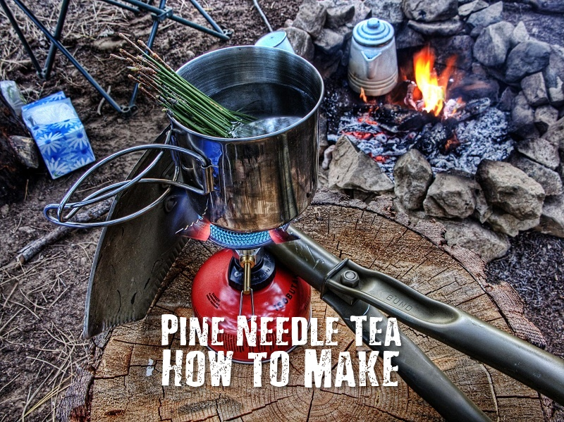 How to Make Delicious Pine Needle Tea Any Time Of The Year - A cup of pine needle tea contains 5 times the Vitamin C of a cup of orange juice, and is also high in Vitamin A. Pine needle tea may help your body expel phlegm caused by the congestion of colds or coughs and even just inhaling the vapors from the tea may break up mucus in the lungs.