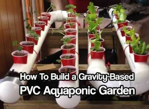 How To Build A Gravity Based Pvc Aquaponic Garden