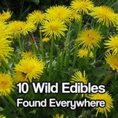 10 Wild Edibles Found Everywhere